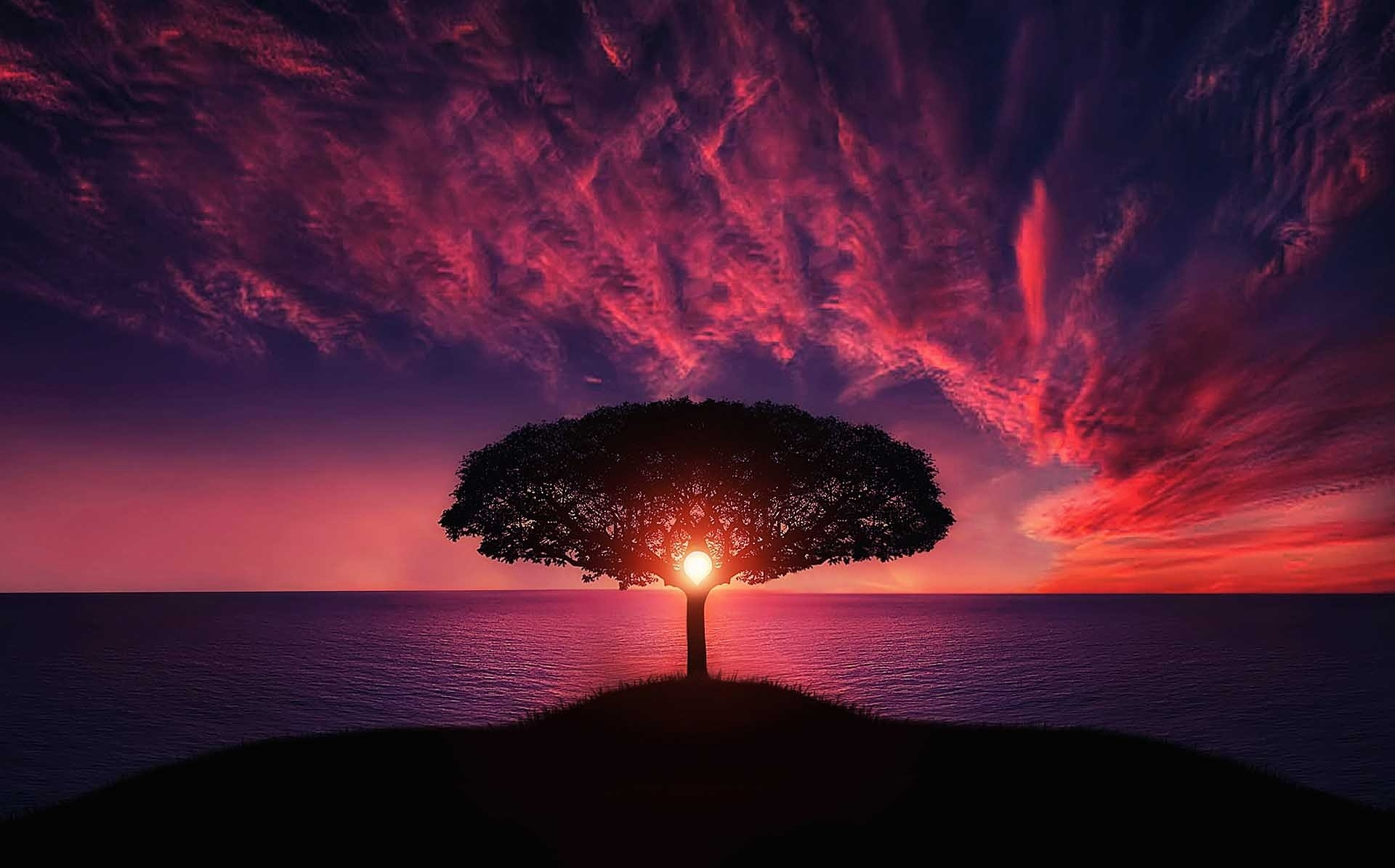 Tree-of-life-with-beautiful-sunset